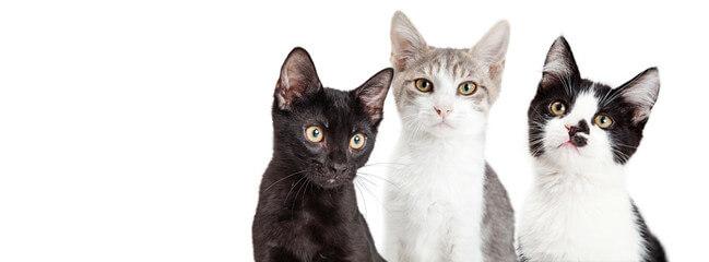 gatitos en la web
